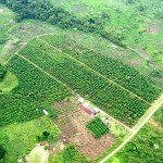 This is an aerial view of the Coffee Farm